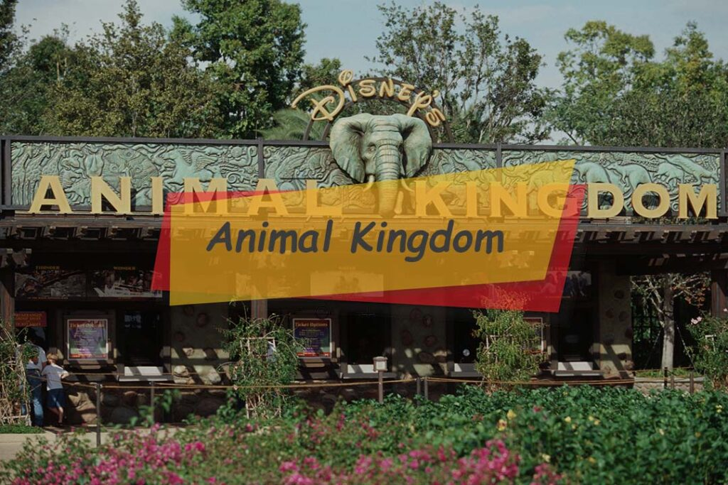 Animal Kingdom - fun attractions for all popular animal characters
